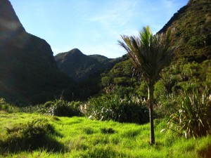Pararaha Valley as the sun rises over the hills